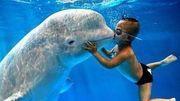 5吨重的白鲸被北极熊攻击,几巴掌下来,白鲸已经受不了!